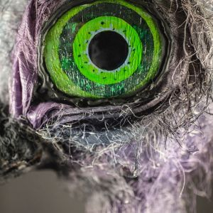 A close-up image of the green and black eye of Claudia the ostrich