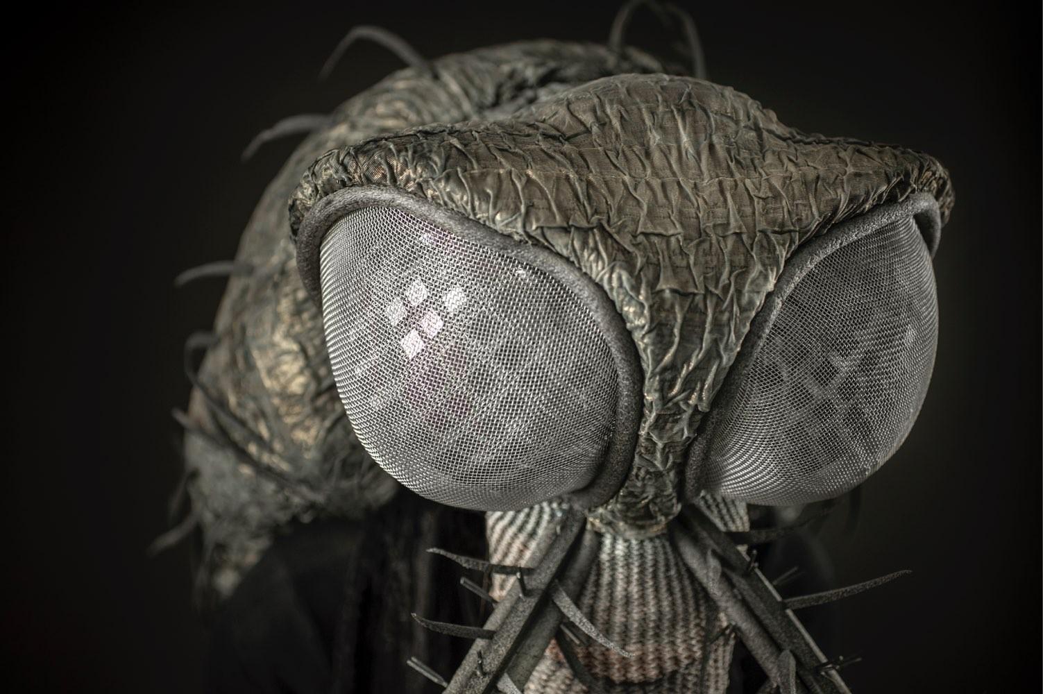 Mosquito close-up
