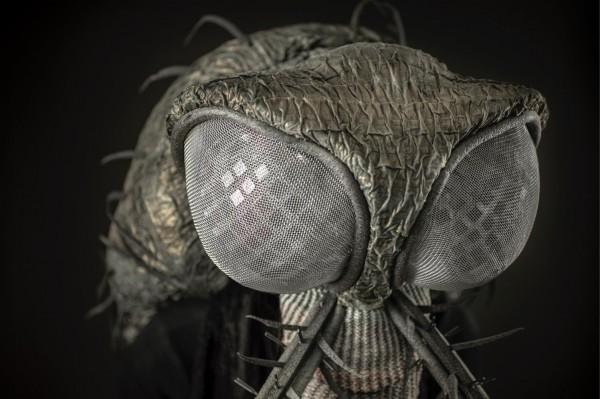 Nærbilde av Myggen