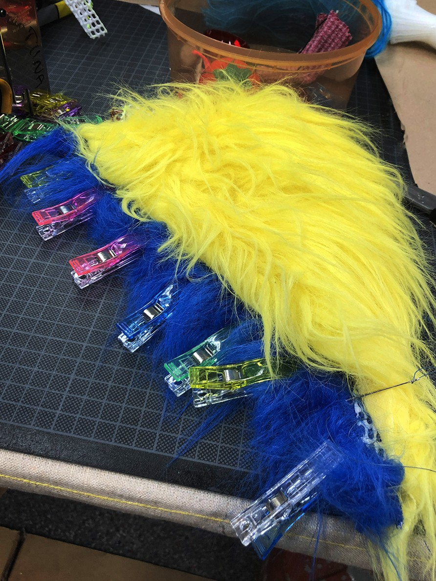 Yellow and blue parrot wing in making