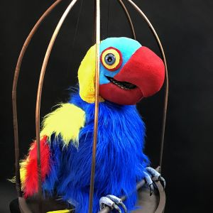 A colourful parrot